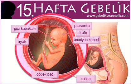 Hamileliğin 15. Haftası