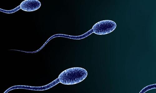 sperm fish testi
