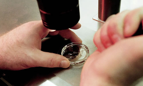 Tüp Bebek Tedavisi ve Ek İlaçların Kullanımı