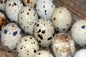 Bıldırcın Yumurtası Faydaları