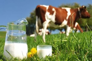 Yeni Doğan İnek Sütü Alerjisi