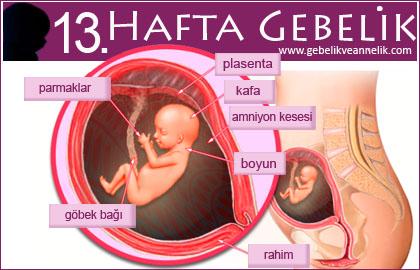 13 hafta gebelik