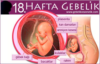 18 hafta gebelik