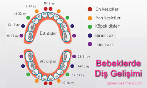 Diş Çıkarma Tablosu