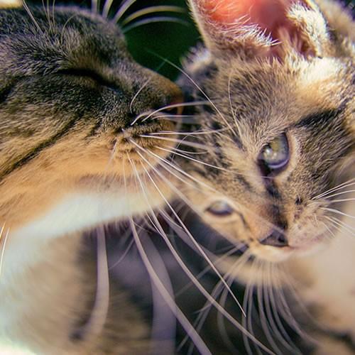 Hayvanlar Alemi ve Sevimli Yavrular